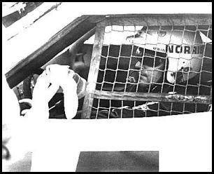 #15 Bobby Allison